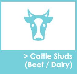 Cattle Stud Websites