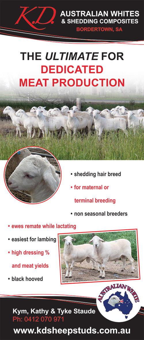 KD Sheep Studs 2