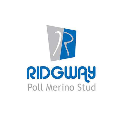 Ridgway Poll Merino Stud